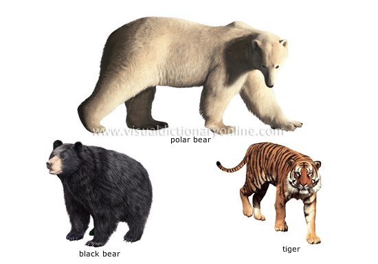 examples of carnivorous mammals [1]