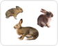 examples of lagomorphs