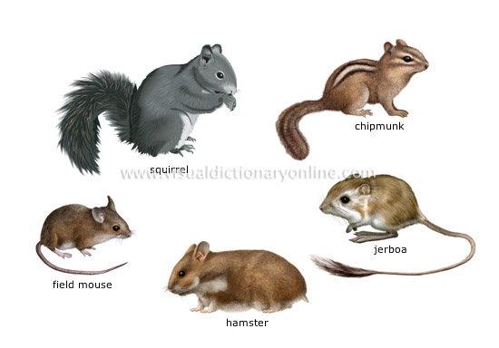 examples of rodents [1]