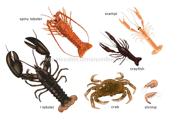 FOOD & KITCHEN :: FOOD :: CRUSTACEANS image - Visual ...