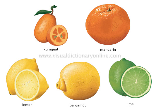 citric acid, vitamin from citric fruits essay Below is an essay on vitamin c content in fruit juice from anti essays,  citric acid content in orange juice  could genetic modification of fruits and.