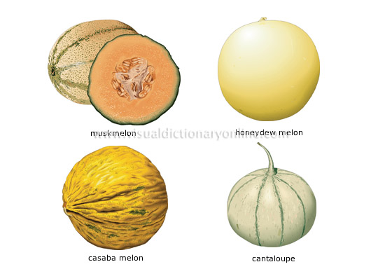 melons [1]