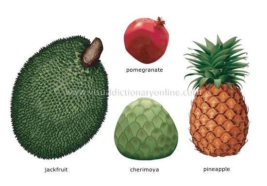 tropical fruits [2]