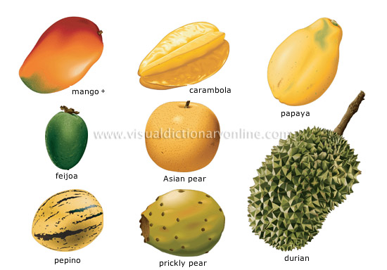 tropical fruits [4]