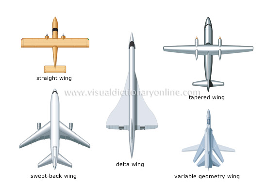 examples of wing shapes